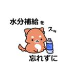 しば犬大福1(個別スタンプ:3)