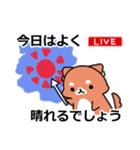 しば犬大福1(個別スタンプ:05)