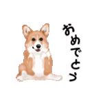 動くヨ!コーギー(個別スタンプ:10)