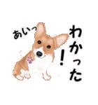 動くヨ!コーギー(個別スタンプ:11)