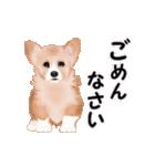 動くヨ!コーギー(個別スタンプ:13)