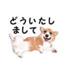 動くヨ!コーギー(個別スタンプ:14)