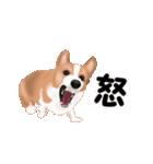 動くヨ!コーギー(個別スタンプ:16)