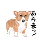 動くヨ!コーギー(個別スタンプ:19)