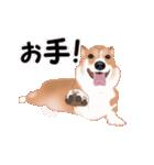 動くヨ!コーギー(個別スタンプ:21)