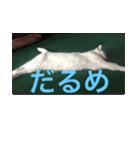 ちぃちゃん2(個別スタンプ:1)
