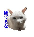 ちぃちゃん2(個別スタンプ:2)