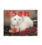 ちぃちゃん2(個別スタンプ:4)