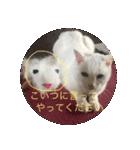 ちぃちゃん2(個別スタンプ:6)