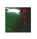 ちぃちゃん2(個別スタンプ:7)