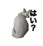 ちぃちゃん2(個別スタンプ:8)