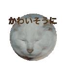 ちぃちゃん2(個別スタンプ:11)