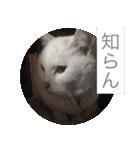 ちぃちゃん2(個別スタンプ:12)