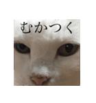ちぃちゃん2(個別スタンプ:13)