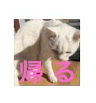 ちぃちゃん2(個別スタンプ:15)