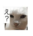 ちぃちゃん2(個別スタンプ:16)
