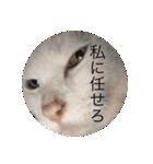 ちぃちゃん2(個別スタンプ:20)