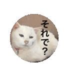 ちぃちゃん2(個別スタンプ:23)