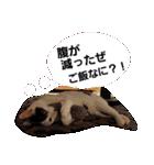 ゆげるすたんぷ3(個別スタンプ:12)