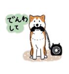 Every Day Dog 柴犬 日本語2