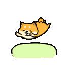 動く!むっちりでかわいい柴犬(個別スタンプ:03)