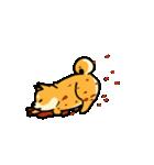 動く!むっちりでかわいい柴犬(個別スタンプ:05)