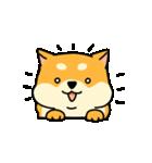 動く!むっちりでかわいい柴犬(個別スタンプ:06)