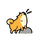 動く!むっちりでかわいい柴犬(個別スタンプ:16)