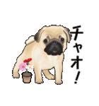 動くヨ! パグッちⅡ(個別スタンプ:2)