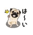 動くヨ! パグッちⅡ(個別スタンプ:3)