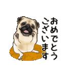 動くヨ! パグッちⅡ(個別スタンプ:13)