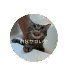 可愛い3匹の猫 相槌とか