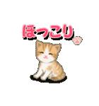 ちび猫2 でか文字オノマトペ(個別スタンプ:24)