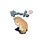 ちび猫2 でか文字オノマトペ(個別スタンプ:35)