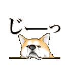 秋田犬LOVE 2(個別スタンプ:28)