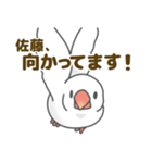 【佐藤専用】文鳥さんスタンプ(個別スタンプ:33)