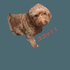 愛犬  マユ