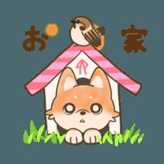 柴犬ちゃんの日常図鑑2