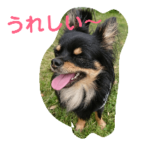 我が家の愛犬エアロっぷー