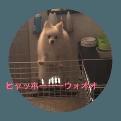 ブサカワ犬のゴマとコロ2