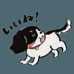 犬のチャコ