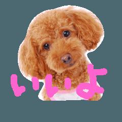わが家の愛犬スタンプ2