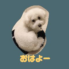ビジョン犬のモコちゃん