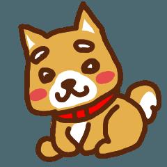 柴犬/まるちゃん
