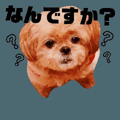 ミックス犬ぱんのつぶやき