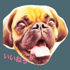 ミックス犬ゆいちゃんの日常会話
