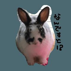 癒しなウサギ