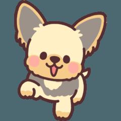 子犬のヨーキー
