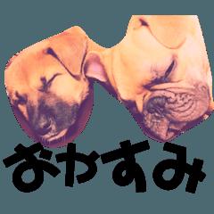 可愛い癒し犬