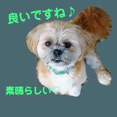 シーズ犬、ムク君の幸せな日々♡